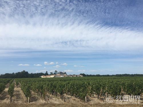 春夏之交,一览法国葡萄酒市场风起云涌