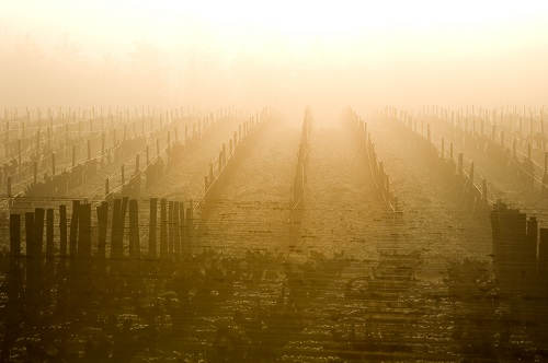 2019芝路 | 人与自然和谐共谱的苏玳佳酿