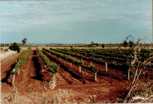 购酒指南:大洋洲最受欢迎的葡萄酒品牌