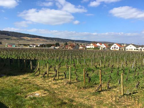 细读:勃艮第产区葡萄酒地图