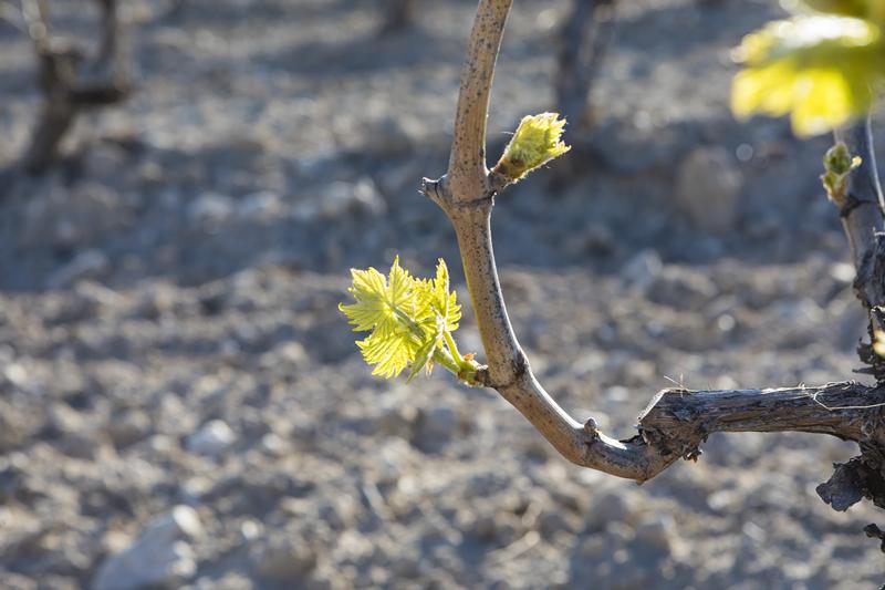 西班牙酒王尤尼科十年品鉴