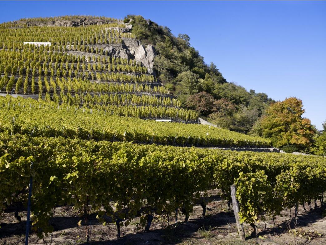 罗纳河谷风格的葡萄酒怎么样?