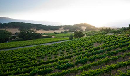 美国最佳梅洛葡萄酒生产商名录(中)