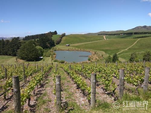 新西兰葡萄酒旅游指南