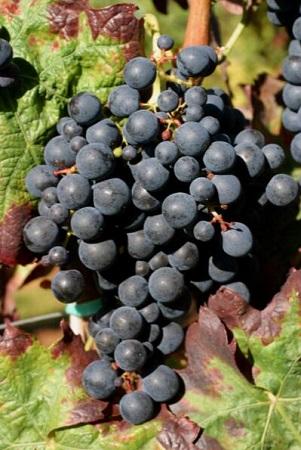 從A到Z解讀西班牙葡萄酒關鍵詞