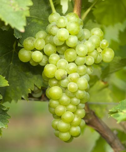 意大利葡萄酒入门——皮埃蒙特