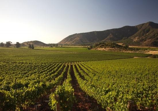 游智利圣地亚哥,这些葡萄酒产区你不能错过