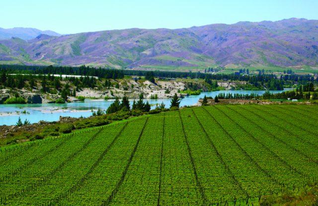 16.6亿新西兰元!新西兰葡萄酒出口额再创新高