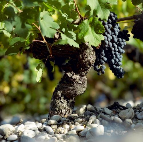 杜夫家族:掌管波尔多9大酒庄的知名葡萄酒世家