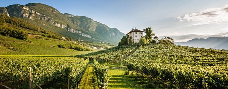 意大利有个产区叫上阿迪杰