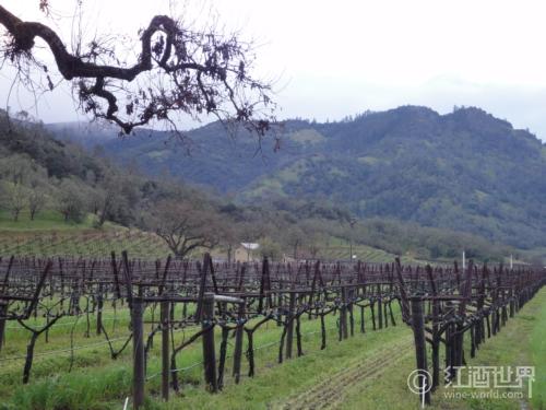 美国两大葡萄酒产区异同