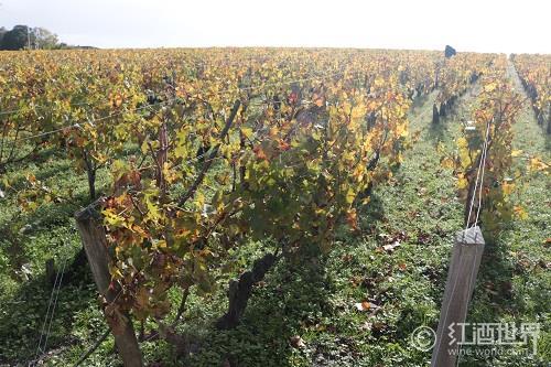葡萄牙阿连特茹——红酒中的灰姑娘
