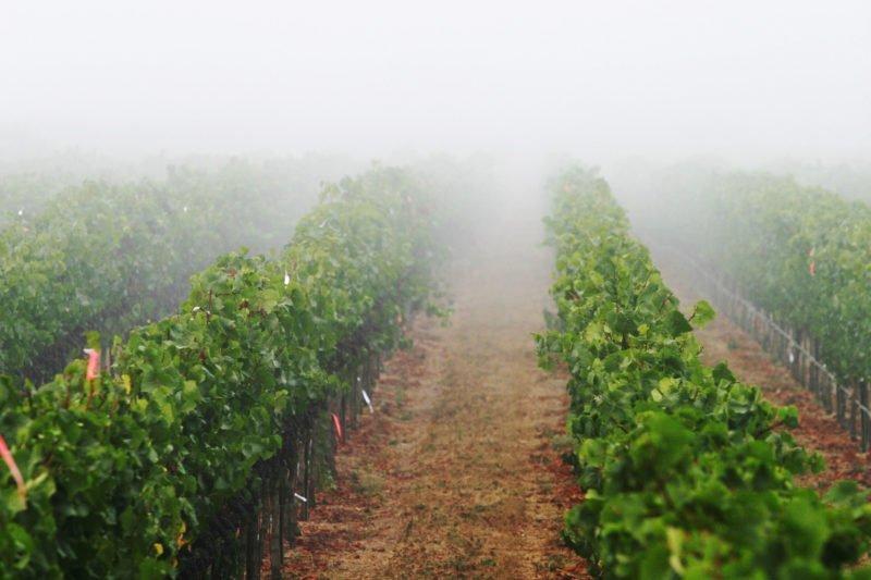 加州顶级葡萄园知多少