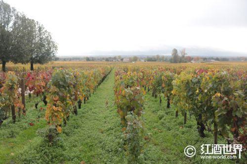 葡萄酒的香气和风味源自何方?