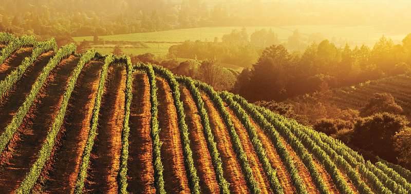 了解新世界产酒国,你需要从这些葡萄酒入手