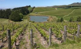 新西兰葡萄酒地图:无限江山,尽在一图