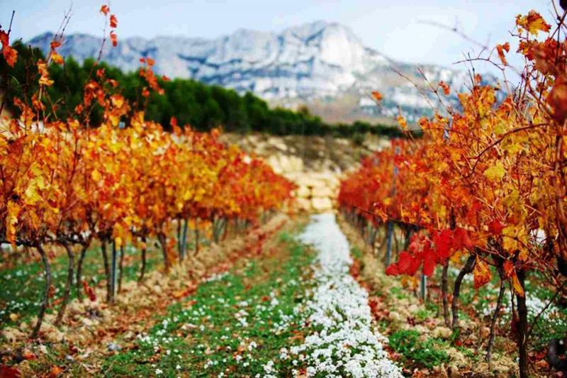 令人赞叹的里奥哈白葡萄酒