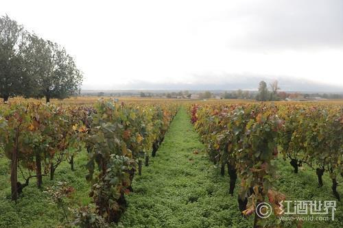 影响葡萄酒风味的3大因素