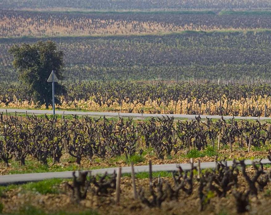 当罗纳河谷葡萄酒遇上中国