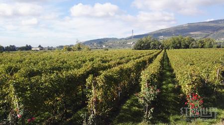 葡萄酒大师带你领略希腊、保加利亚、意大利葡萄酒的魅力