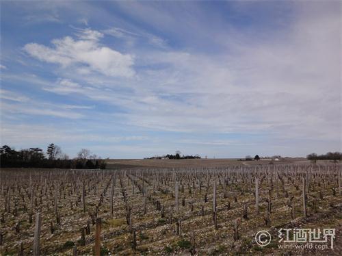 纳帕谷6级强震,撼动美国葡萄酒业