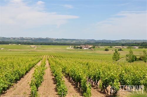 两大勃艮第酒商积极收购葡萄园