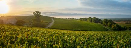 一文了解法国葡萄酒分级体系