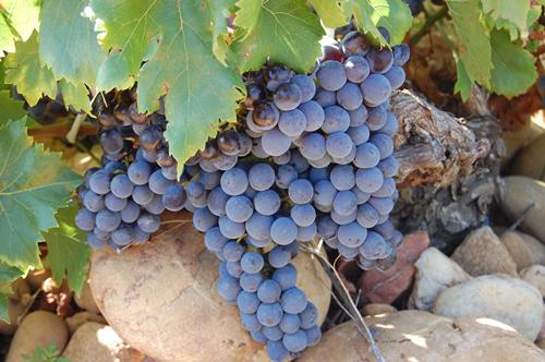 解惑!我的葡萄酒可以陈年吗?