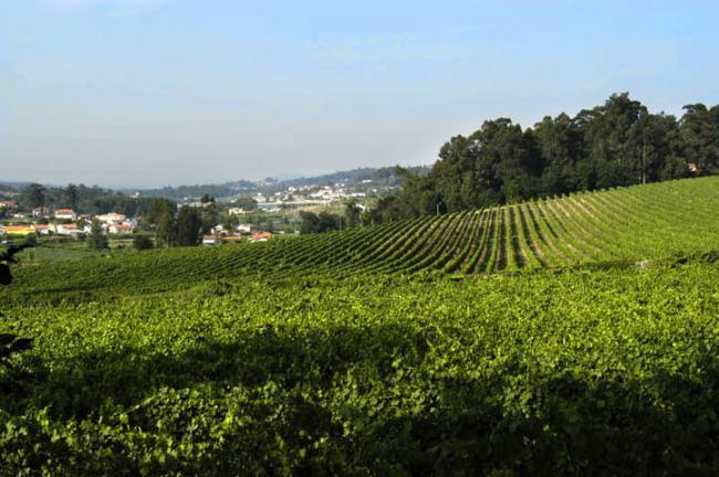 绿酒:葡萄牙的特色葡萄酒