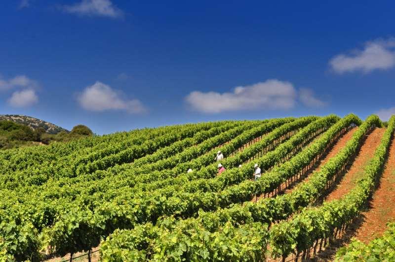 希腊葡萄酒的复兴