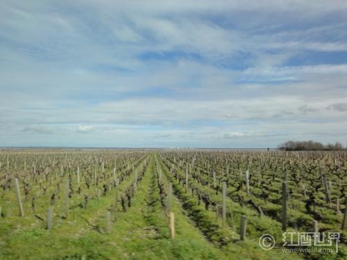 博若莱三大酒庄联手阻止葡萄种植面积减少