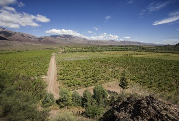 阿根廷葡萄酒之旅