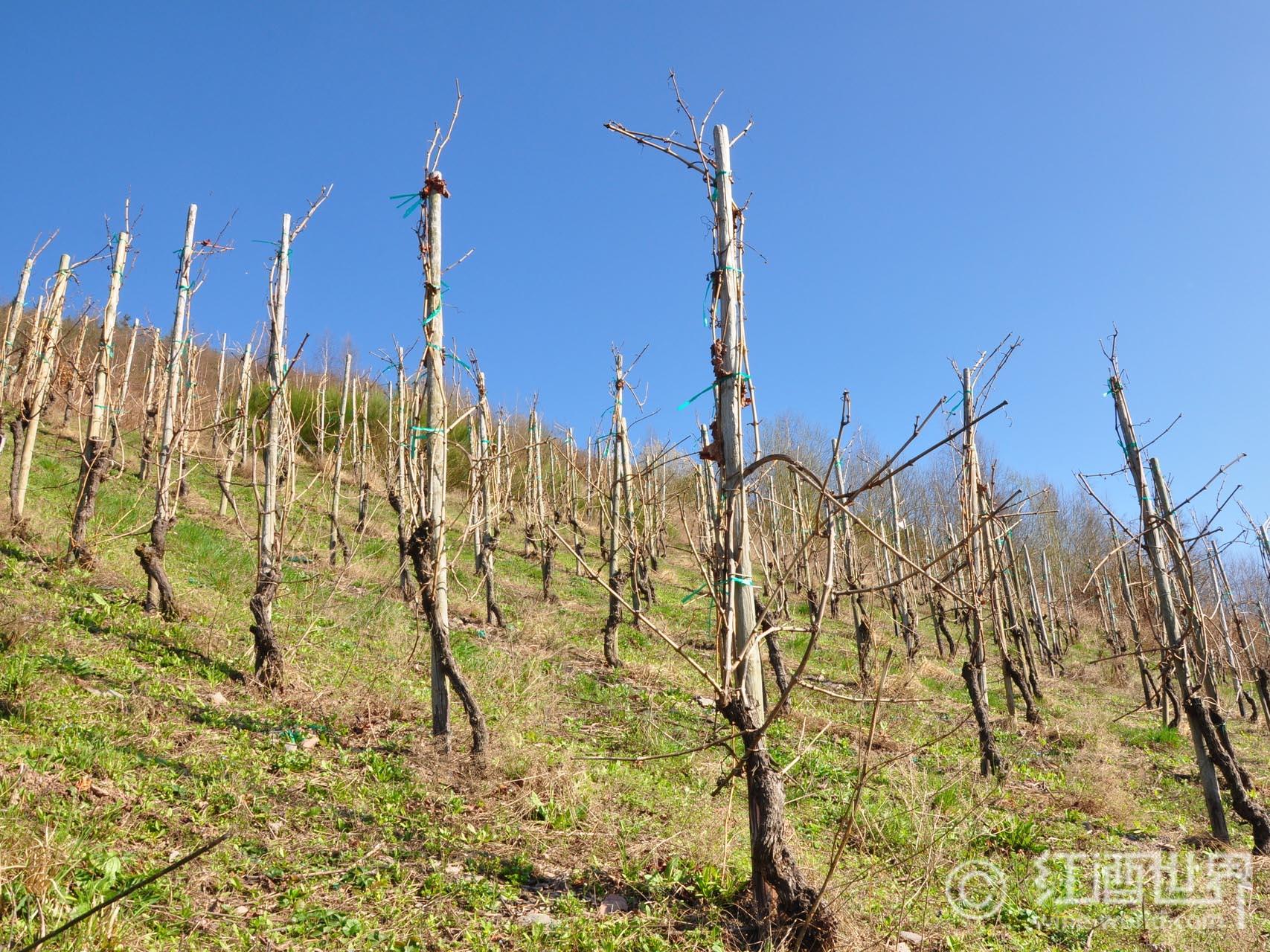 全方位解析德国13大葡萄酒产区