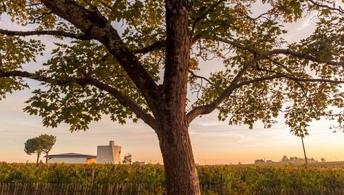 波尔多十大最贵葡萄酒,第一名你听说过吗?