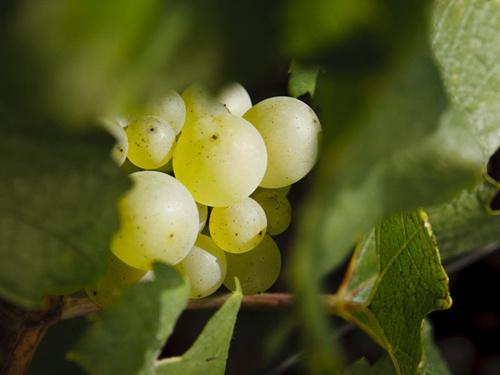 圣地金丘:告诉你什么是顶尖的勃艮第名酒