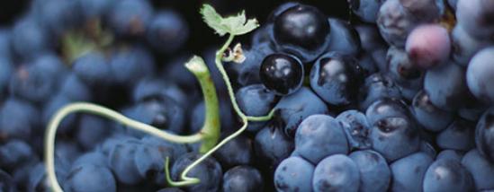 澳大利亚:美酒美食伴你一路同行