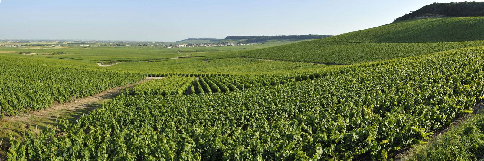 香槟子产区之马恩河谷