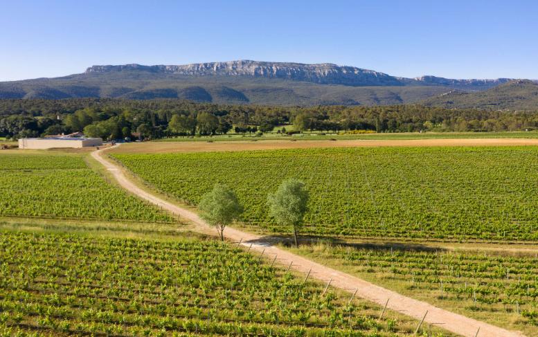 普罗旺斯:桃红葡萄酒的天堂
