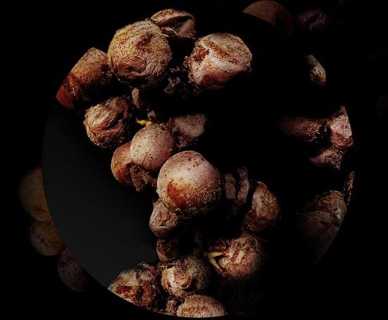 什么!真菌感染的葡萄,酿成酒香气可能更佳?