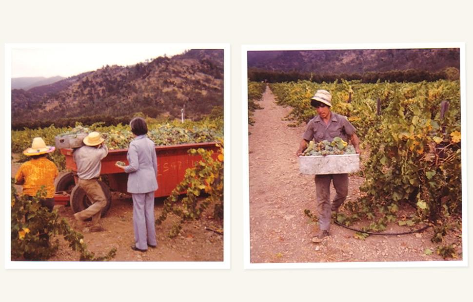 当拉图遇到纳帕——2013阿罗珠安塔西亚