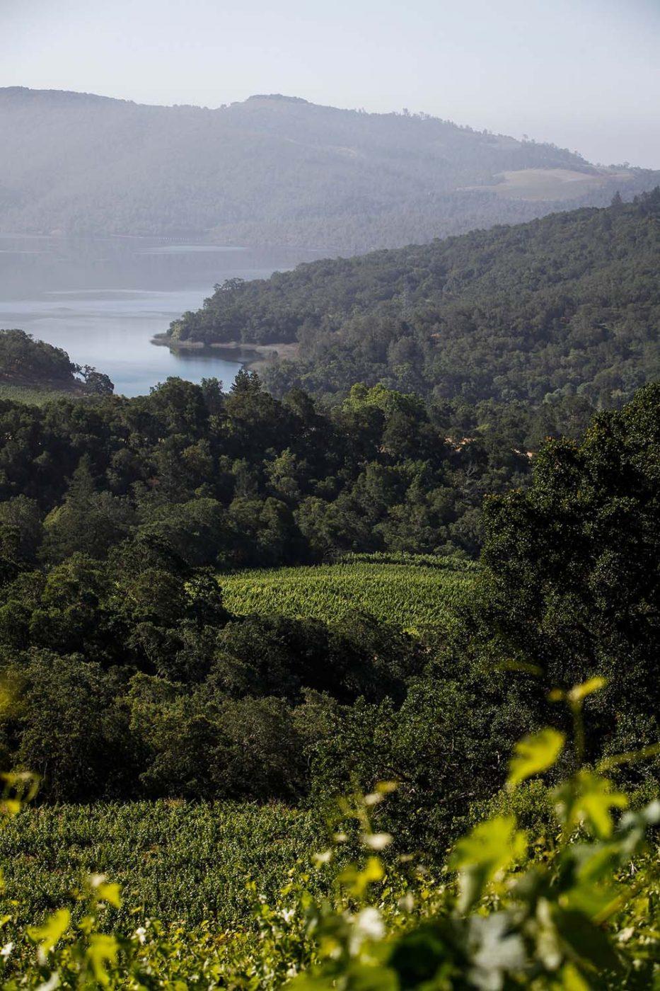 2012希维酒庄卡维娜,带你探秘纳帕谷隐秘的卓越风土