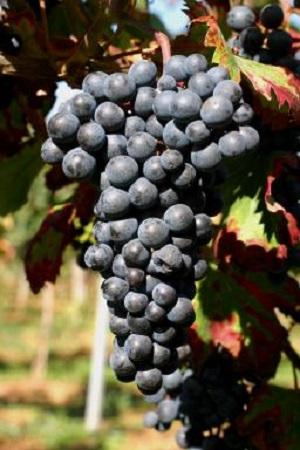 盘点深色红葡萄酒(上)