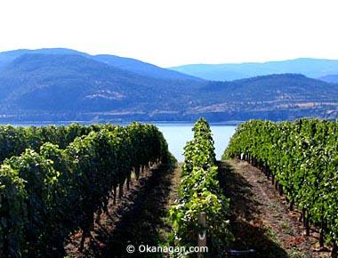 新葡萄产区不断涌现,古老葡萄品种复兴