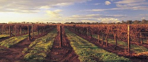 澳大利亚优质产区大盘点