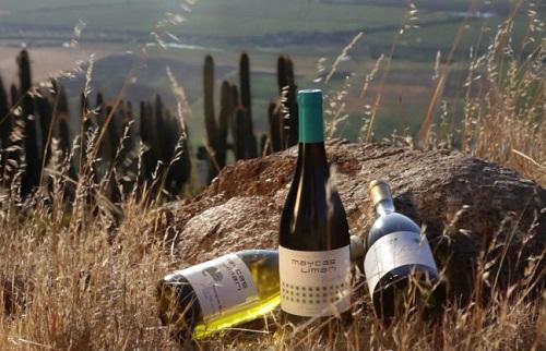智利酒业巨头:干露酒庄
