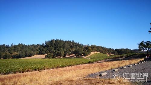 2013:华盛顿葡萄酒的新记录