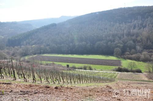 发现德国黑皮诺葡萄酒