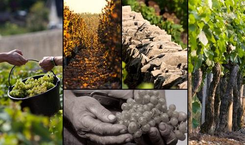 探索黑皮诺全球优质产区