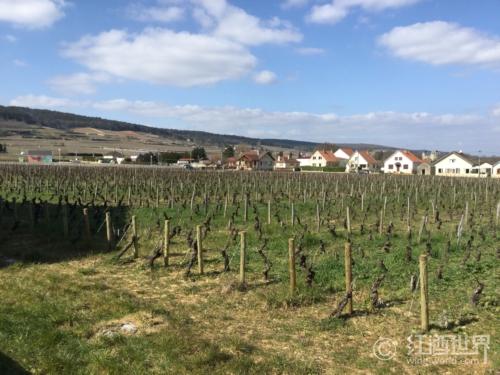 波尔多VS勃艮第,谁为法国葡萄酒代言?