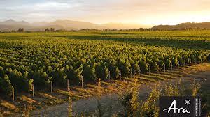 阿拉酒庄Ara Wines